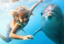 Photo of Dolphins In India- Best Places To Visit Them