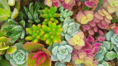 Photo of How To Make Succulents Thrive All Year Round